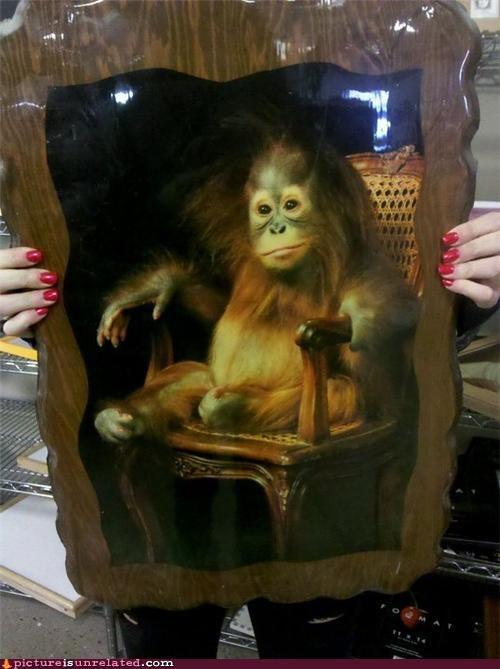 anthropomorphic,ape,celeb,cute,frame,picture,wtf