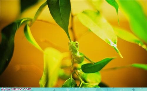 Chameleon's are the best at hide-and-go-seek