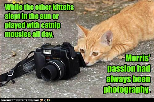 While the other kittehs slept in the sun or played with catnip mousies all day,