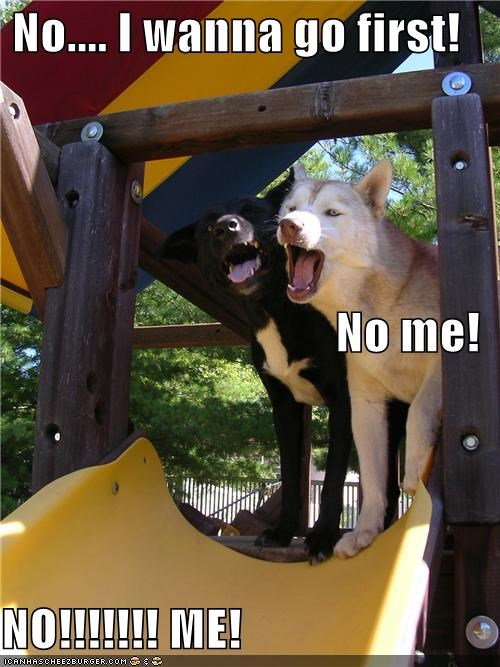akita,arguing,bickering,dibs,fighting,first,going first,malamute,mixed breed,protesting,slide,whatbreed