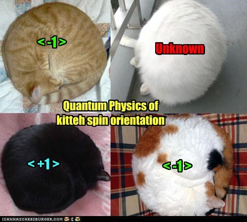 Quantum Physics of kitteh spin orientation