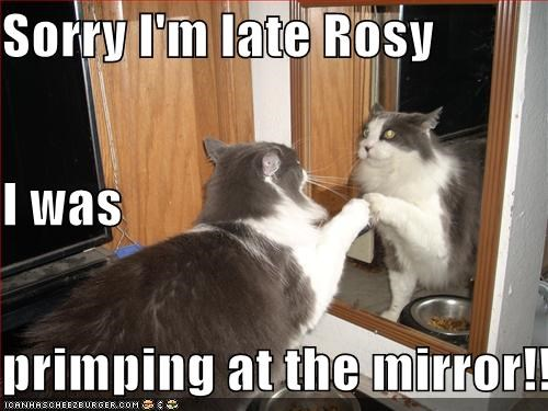 Sorry I'm late Rosy I was primping at the mirror!!