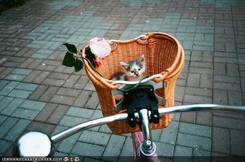 basket,bike,cyoot kitteh of teh day