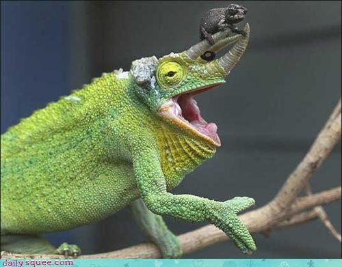Acting Like Animals: Matryoshka Lizards