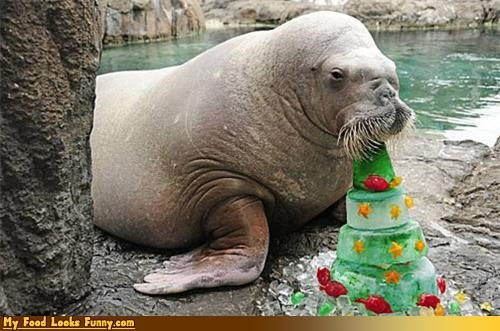 Funny Food Photos - Walrus Eating a Fruitcake