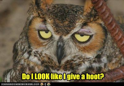 apathetic,caption,captioned,cliché,disinterested,give a hoot,hoot,Owl,sarcasm,sarcastic,unhappy