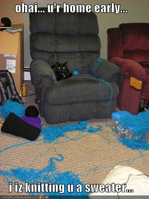 ohai... u'r home early...  i iz knitting u a sweater...