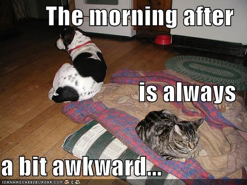 The morning after  is always  a bit awkward...