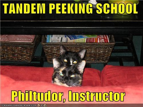 caption,captioned,cat,Cats,couch,instructor,peek,peekaboo,peeking,school,tandem