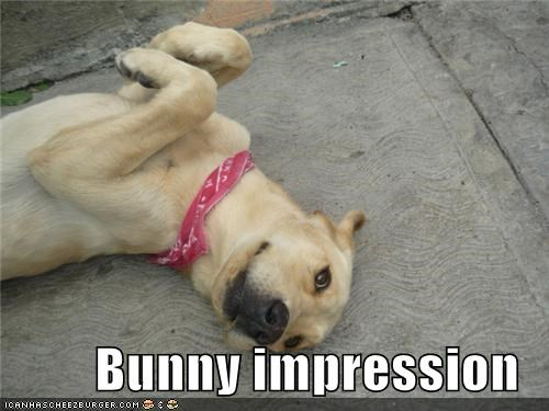 Bunny impression