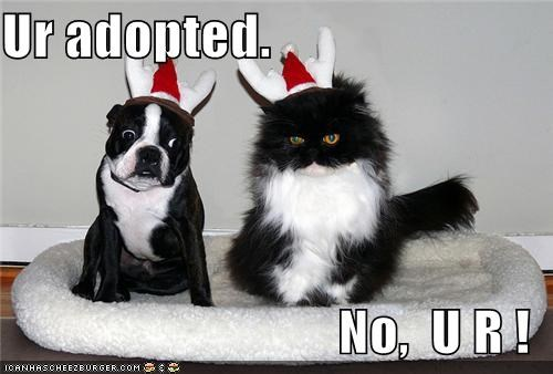 Ur adopted.  No,  U R !