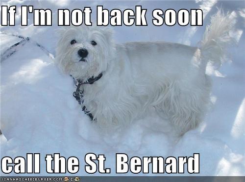 braving the elements,call,instructions,request,saint bernard,snow,snowstorm,terrier,winter