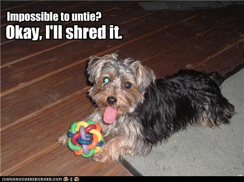 alternative,challenge,compromise,impossible,shredding,solution,toy,untie,untying,yorkshire terrier