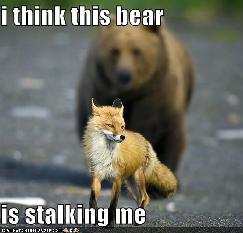 i think this bear  is stalking me