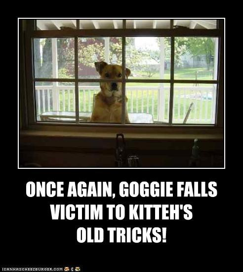 ONCE AGAIN, GOGGIE FALLS  VICTIM TO KITTEH'S OLD TRICKS!