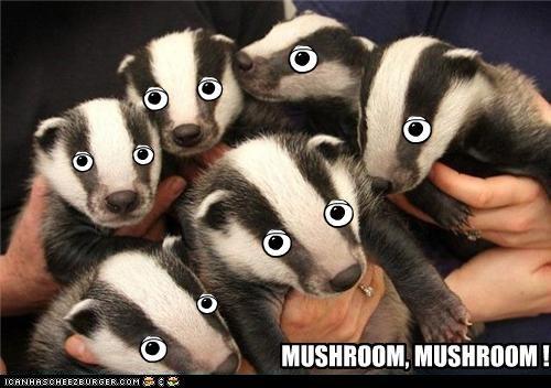 animemes,badger,hallelujah,mushroom,oh snake,presents,santa,snake,Video,weebl