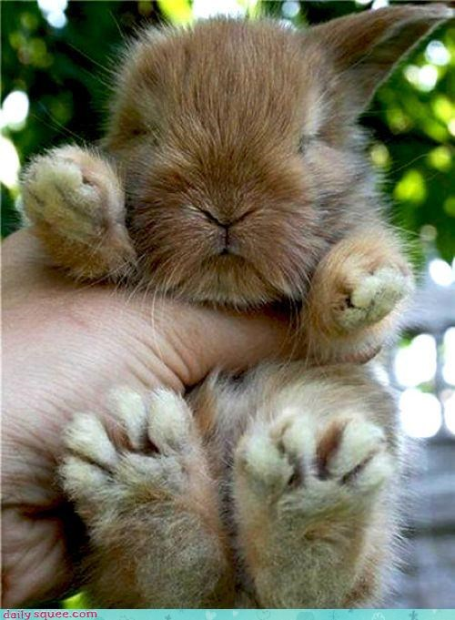 Daily Squee: Bunday - Big Foot