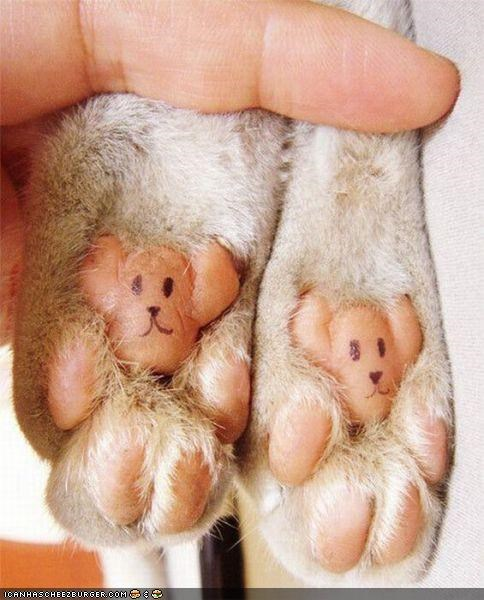 Kitteh Art: Teddy Paws