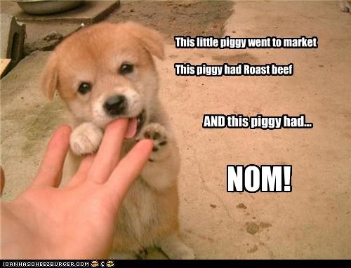 corgi,finger,gnawing,market,nom,pun,puppy,rhyme,roast beef,this little piggy