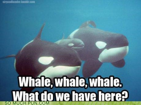 famous quote,literalism,off-rhyme,question,well,whale