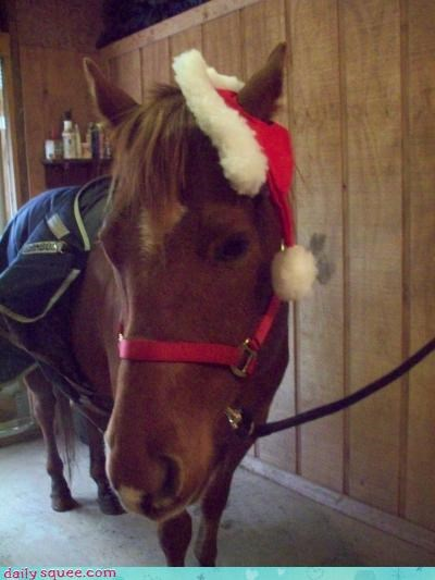 christmas,horses,squee,santa hat,holidays