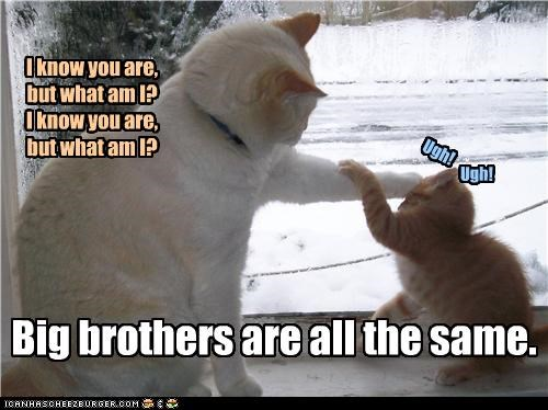 all the same,annoying,big brother,brothers,caption,captioned,cat,Cats,game,insult,teasing,torment