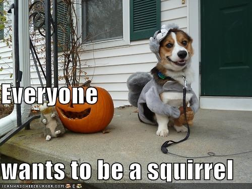 Everyone wants to be a squirrel