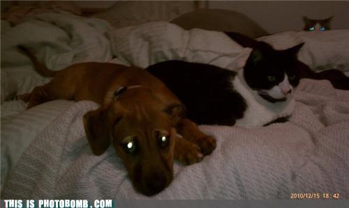 animals,Cats,cute,dogs,photobomb