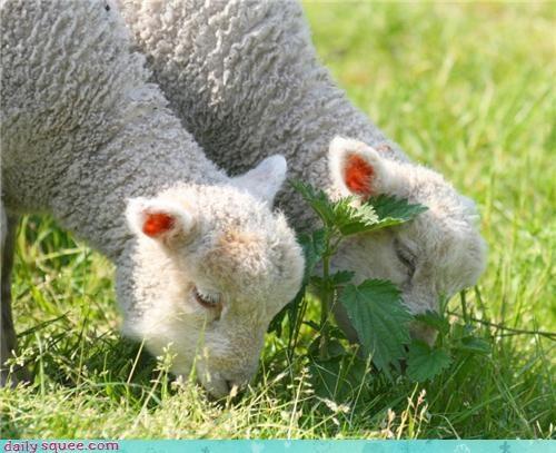 fashion,fleece,sheep,sweater,wool