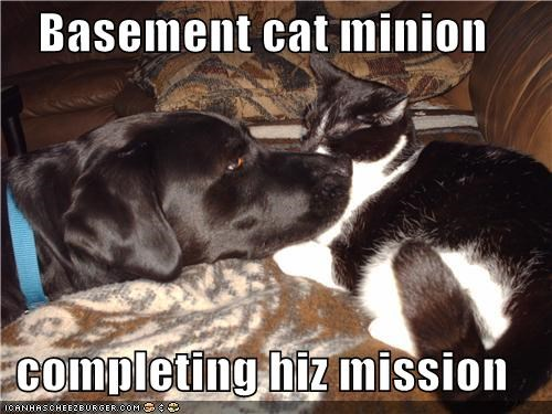 Basement cat minion  completing hiz mission