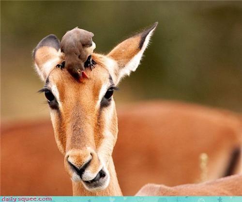 birds,stylist,gazelle,squee
