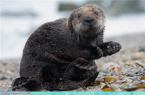 beach,hello,otter,washing,wet,whiskers