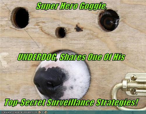 Super Hero Goggie,  UNDERDOG, Shares One Of His Top-Secret Surveillance Strategies!