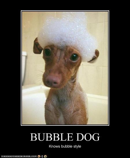 BUBBLE DOG