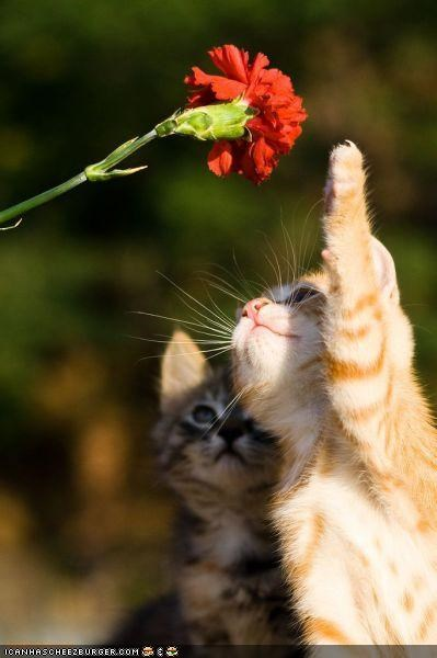 curious,cyoot kitteh of teh day,Flower,hit,investigate,volleyball