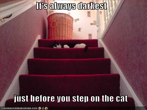 It's always darkest   just before you step on the cat