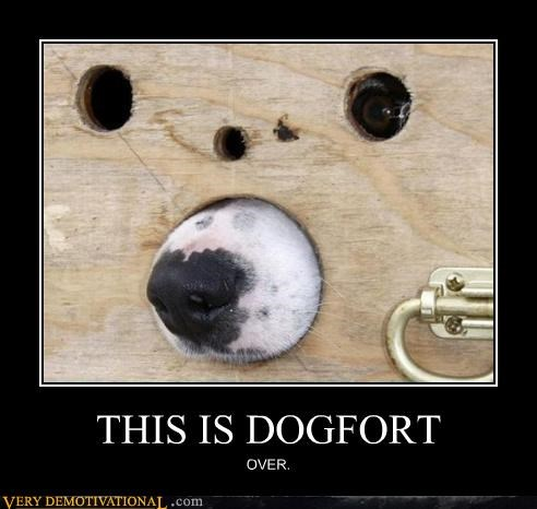 THIS IS DOGFORT