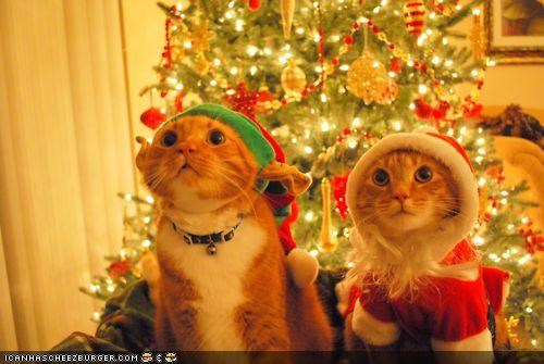 Meowy Christmas Kittehs of teh Day: Santaz Lil' Halperz