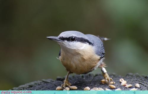 Acting Like Animals: WHATCHA TRYIN' TO DO WITH MY NUTS?