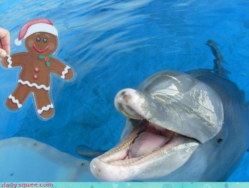 acting like animals,best ever,christmas,comparison,cookies,delicious,dolphin,excited,gift,gingerbread,gingerbread man,present,thank you,trainer