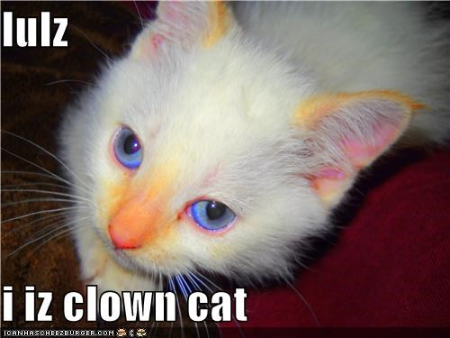 lulz  i iz clown cat