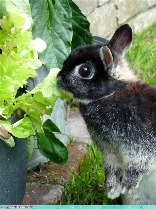 Reader Squee: Rabbit In Trouble!