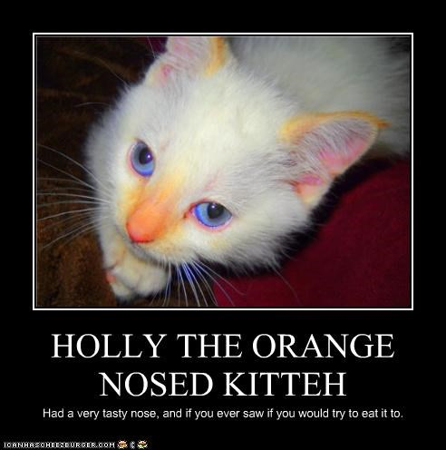 HOLLY THE ORANGE NOSED KITTEH