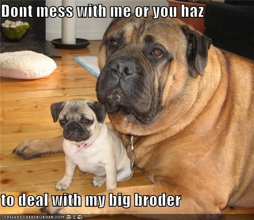 Dont mess with me or you haz   to deal with my big broder