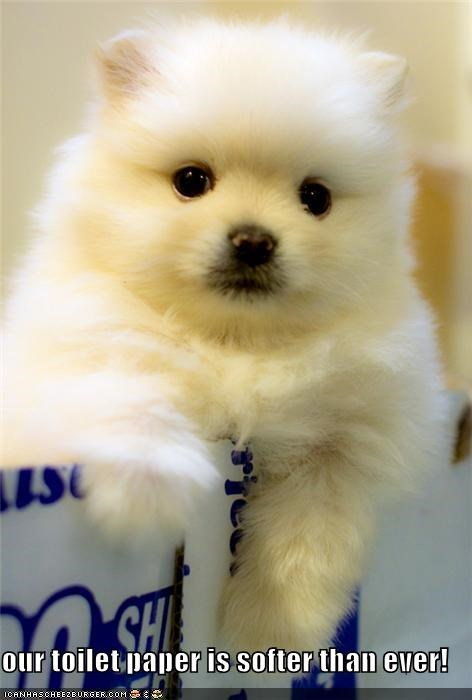 advertisement,best,ever,Fluffy,puppy,soft,softer,toilet paper,whatbreed