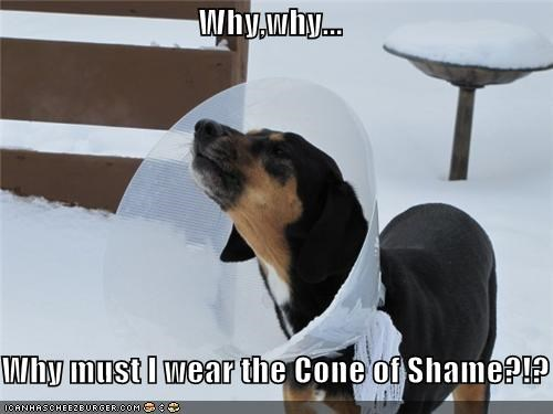 Why,why...  Why must I wear the Cone of Shame?!?