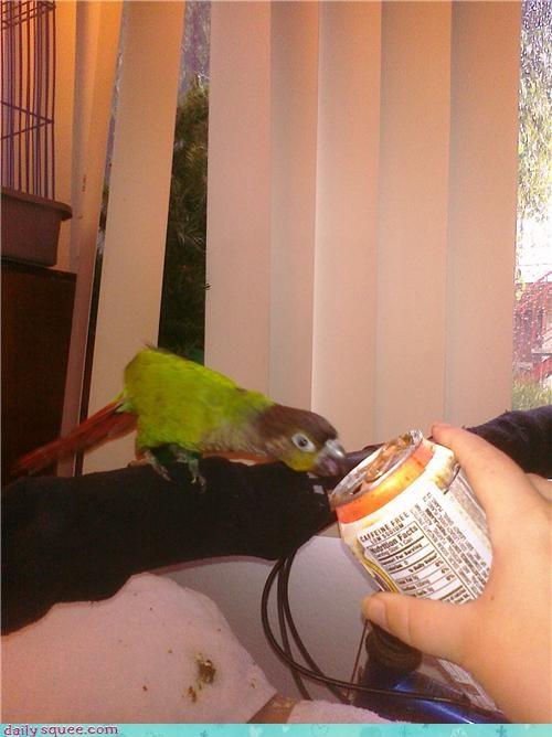 bird,parrot,pet,reader squee,root beer,soda