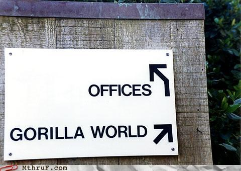 gorillas,offices,signs