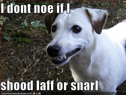 I dont noe if I   shood laff or snarl