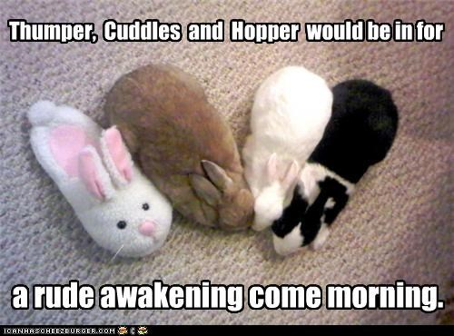 Thumper,  Cuddles  and  Hopper  would be in for